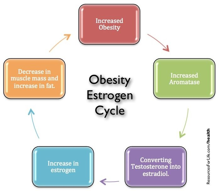 20120420fr-weight-gain-and-the-estrogen-obesity-connection ...